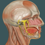 Migraine and TMD: A Complex Relationship (that should not be ignored)